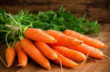 Conheça os Benefícios da Cenoura para a sua Saúde