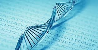 BRCA1 e BRCA2 e o Câncer de Mama e Ovário